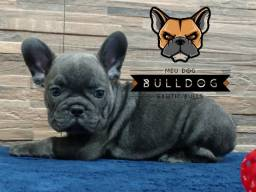 Bulldog frances blue solido