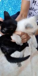 Doa se duas gatinha