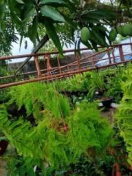 Samambaias e outras Plantas (Imperdível)