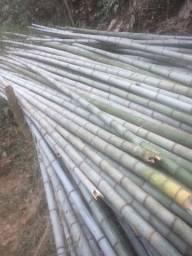 Varas de Bambu hatiko 6cm