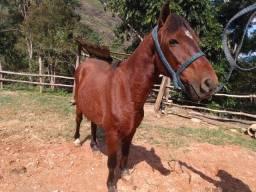 Cavalo manso,bom de carroça,de charrete..