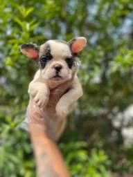 Bulldog Francês compre comigo ligue (11)26051522 ou wpp *