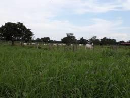 Fazenda 305 Marianópolis To