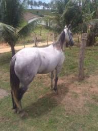 Cavalo místico de manga larga