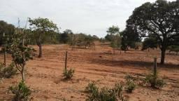 Chácaras com 02, 04 ou 06 hectares - 14km de C.G