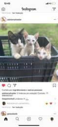 Lindos gatos *54