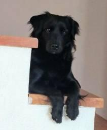 Cachorro Doação Responsável