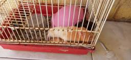 Título do anúncio: Hamster com duas gaiolas