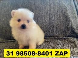 Canil Filhotes Top Cães BH Lulu da Pomeranea Yorkshire Beagle Lhasa Maltês Shihtzu Poodle