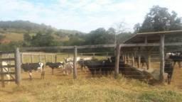 Fazenda 67 Ha Onça de Pitangui