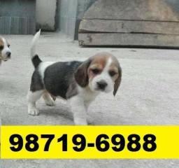 Canil Belos Cães Filhotes BH Beagle Maltês Lhasa Bulldog Pug Lulu Yorkshire Shihtzu