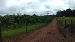 445 hectares com 200 hectares de pasto 30 mil pés de açaí 50 km de Belém valor 2,5 MILHÕES