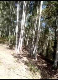 Vende-se eucalipto
