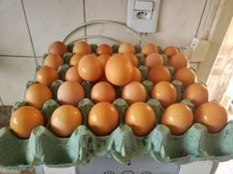 Promoção! Ovos de galinha caipira