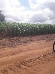 Maranhão Fazenda 15.038 Hectares Cód. FMR-1