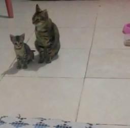 Doação de Gatas (leia, por favor!)