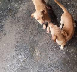 Doa se cachorro fêmea