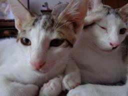 Cat Twins 3 Meses para adoção! *