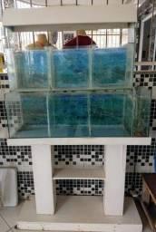 Aquário vidro 140l