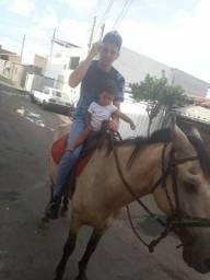 Cavalo ( égua ) marcha picada mais mansa impossível