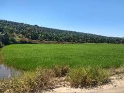 Terreno ao lado da praça da figueira no Guamiranga