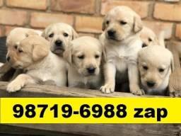 Canil Profissional Filhotes Cães BH Labrador Boxer Pastor Akita Rottweiler Dálmata Golden