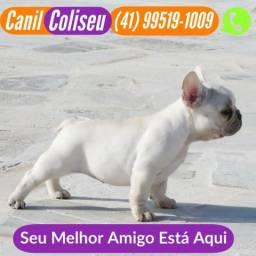 Bulldog francês fêmea creme (41) 99519-1009