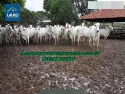 Fazenda com 18.374 Hectares á 40 km de Pirapora