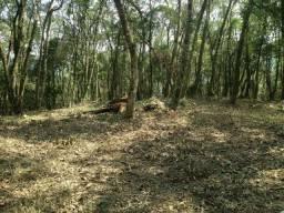 Chácara 2 hectares em Campo Largo
