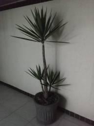 Vaso com planta ornamental