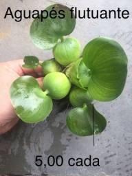 Plantas aquáticas flutuantes