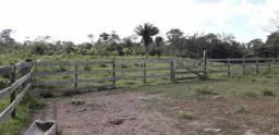 Vendo Terra 400 hectares Leia!
