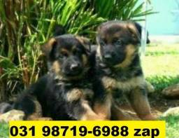 Canil Filhotes Pet Cães BH Pastor Rottweiler Dálmata Labrador Golden Akita