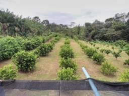 Limão taiti ( direto do produtor )