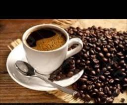 Mudas de cafe