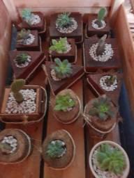 Artesanato madeira para plantas