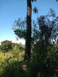 Vendo 310 hec. no pantanal na Colônia Bracinho em Corumbá/MS