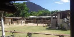 Aluguel de Baia para cavalos Mangalarga Marchador em Itaipuaçu Maricá