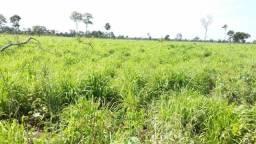 Fazenda de 2.520 hectares, com 1.500 aberto