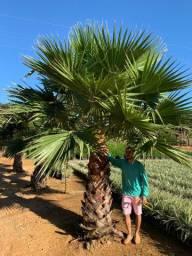 Árvores nativas e palmeiras