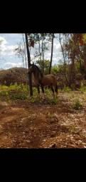 Vendo cavalo inteiro MM