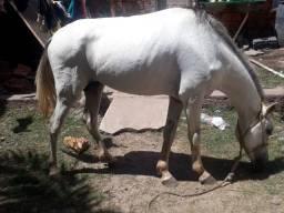Vendo cavalo ou troco em egua