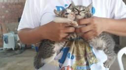 Título do anúncio: Gato para Doação