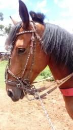Cavalo manga larga. manso