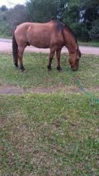 Cavalo ?