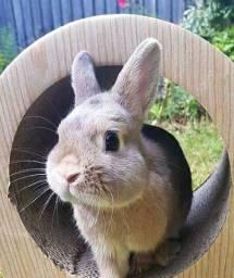 Vendo um casal de coelho