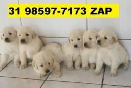 Canil Premium Cães Filhotes BH Golden Dálmata Boxer Labrador Akita Rottweiler