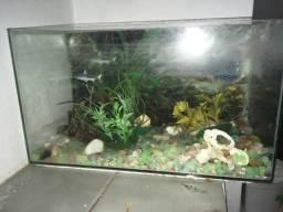 Aquario n4