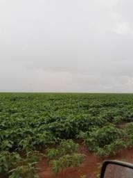 Fazenda em Bandeirantes