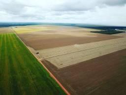 Fazenda arrendamento são jose do xingu ja plantando